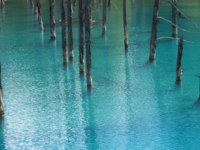 青い池の水面